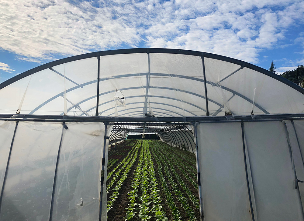 Min egen biodynamiske bonde